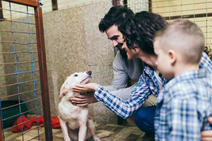 cane famiglia canile