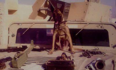 veterano cane guerra