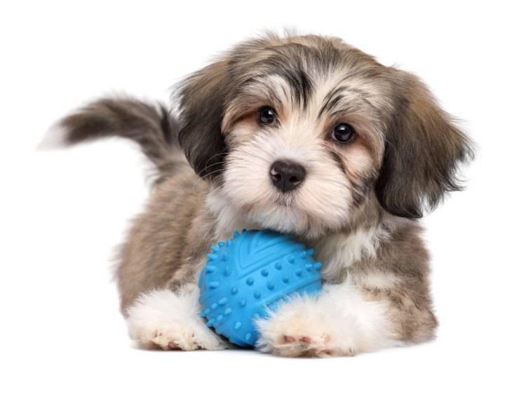 Esercizi per cani da interno