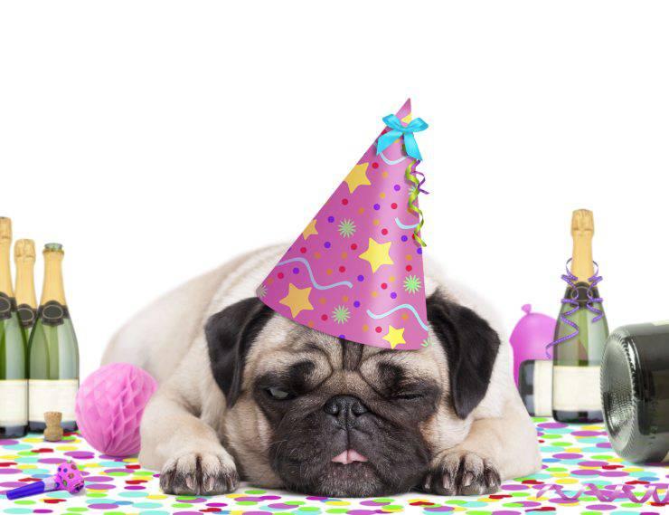 Il nuovo cane dovrebbe partecipare alla festa?