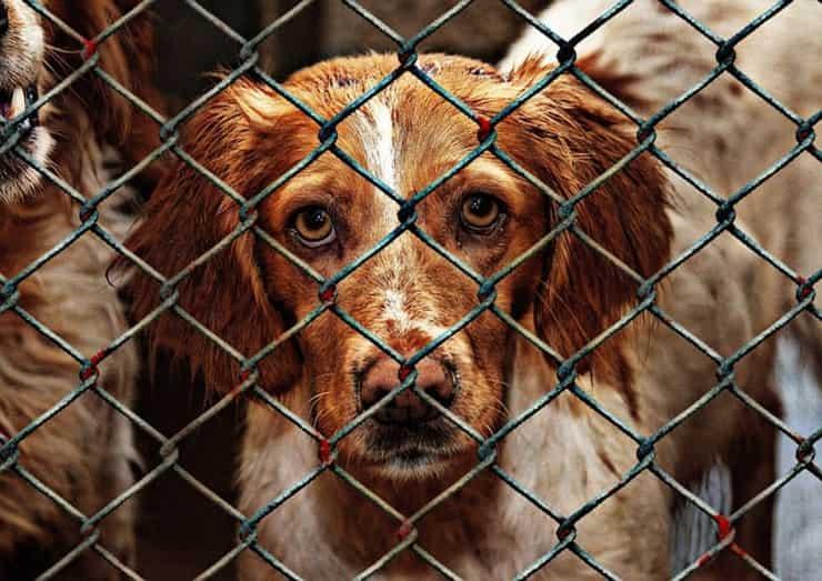 maltrattamenti cani canile