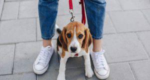 il cane si nasconde tra le gambe