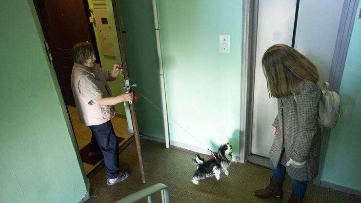 i cani e i gatti a domicilio