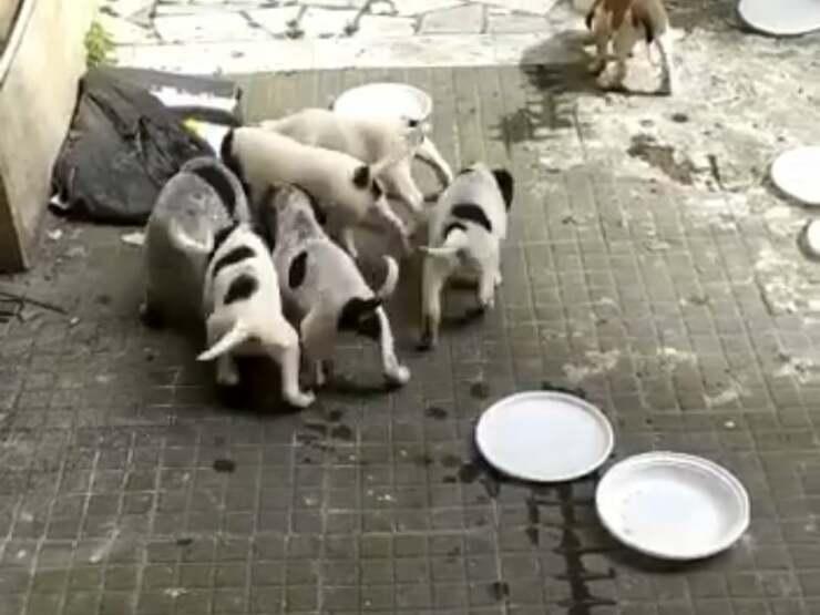 cuccioli scatola Roma