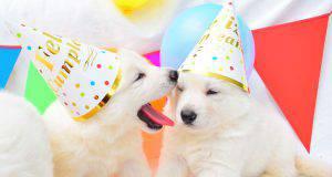 la puppy shower, la festa per l'arrivo di un cucciolo