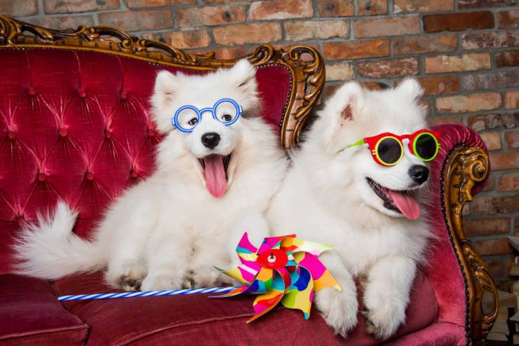 Attività per cani e umani alla festa