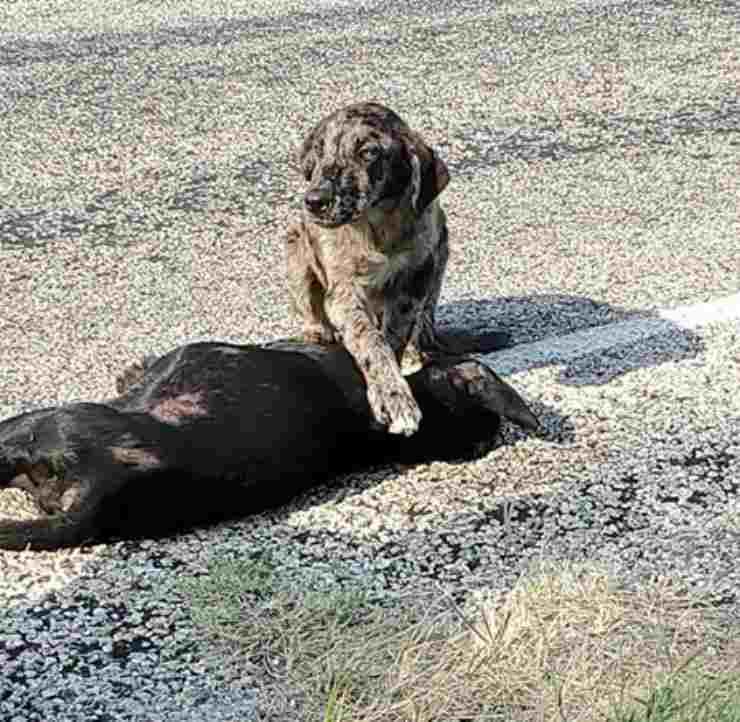 cane veglia corpo sorella