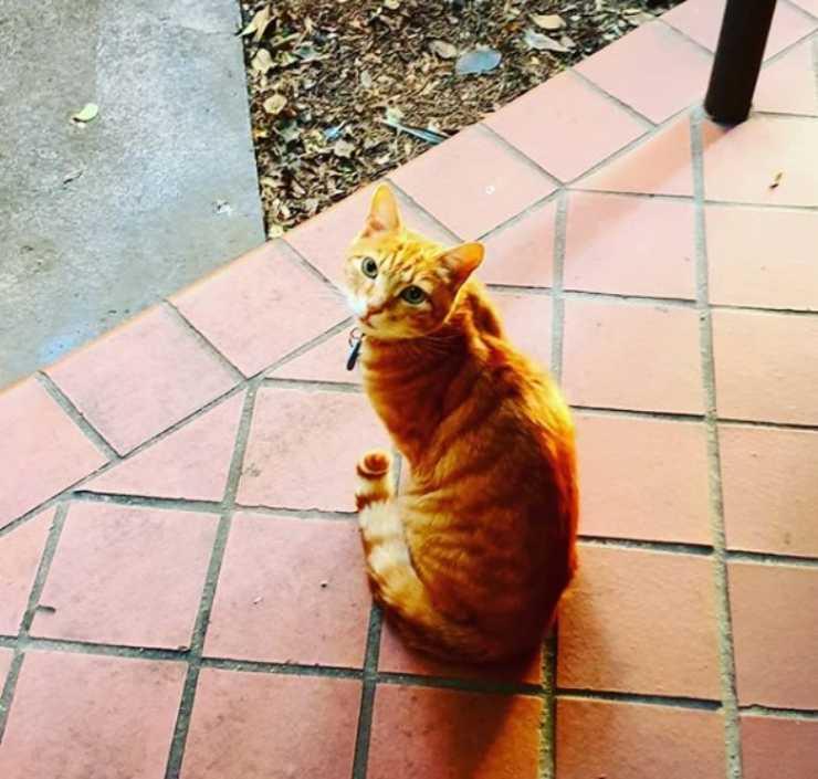 gatto intrufola casa vicini