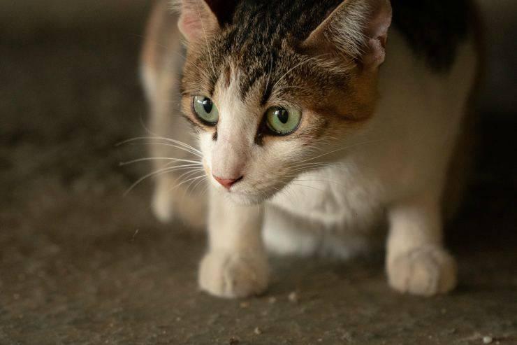 Il gattino sospettoso (Foto Pixabay)