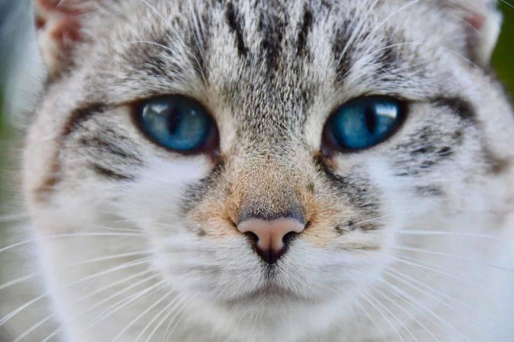 Gatti domestici dieci curiosità