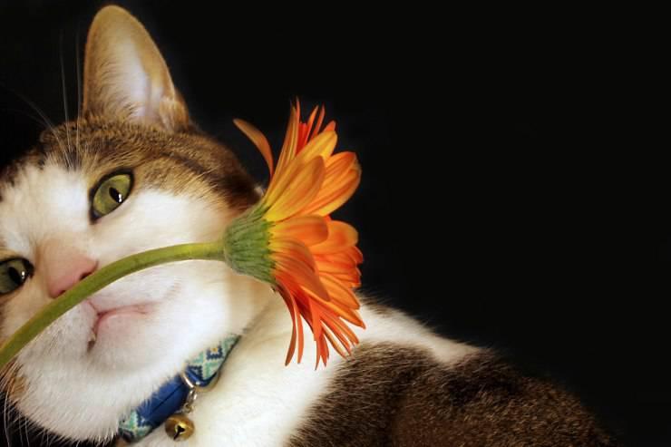 perchè il gatto puzza