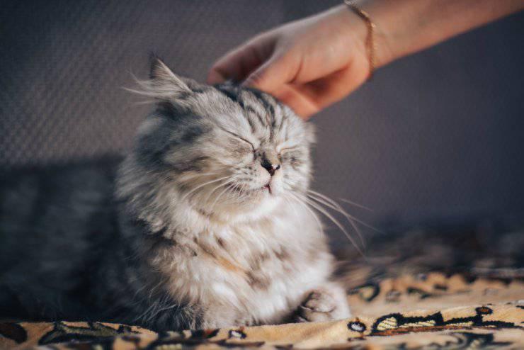 Il gatto riconosce il suo padrone