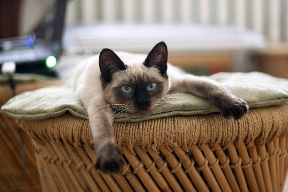 Il micio sul divano (Foto pixabay)