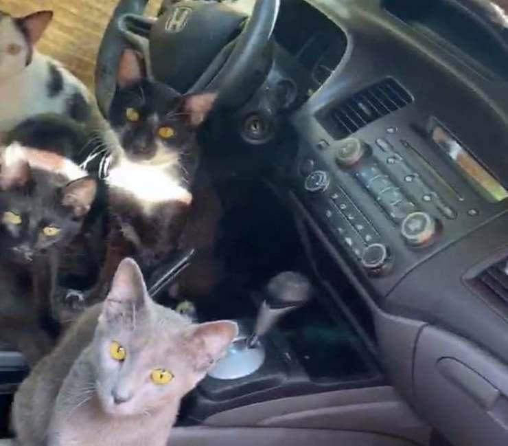 24 gatti in macchina