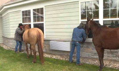 cavalli centro anziani