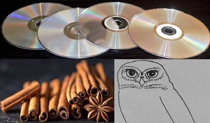 cd cannella e disegno gufo