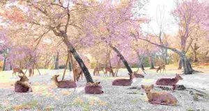 cervi ciliegio fiore
