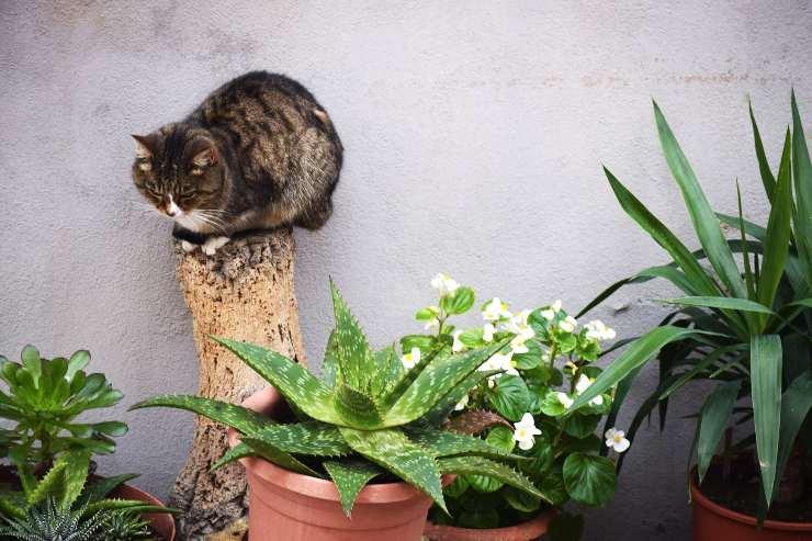 Giardino per gatti