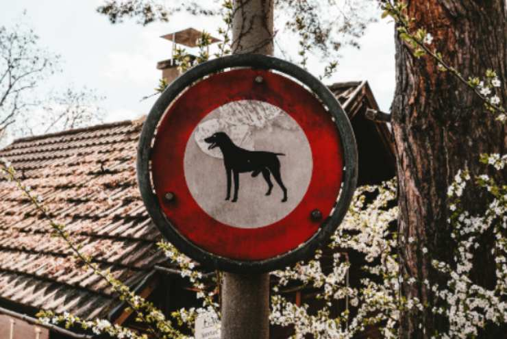 Città pet-friendly in Italia