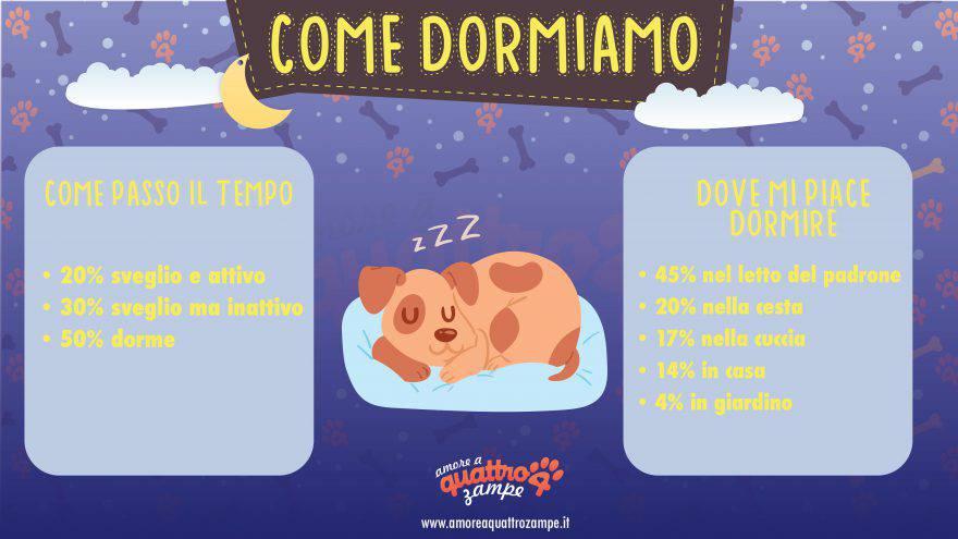 quanto dorme cane infografica