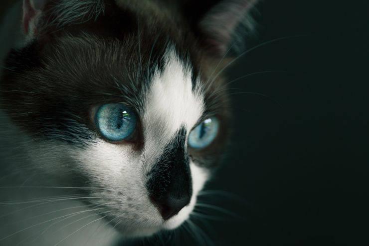 come funziona mente gatto