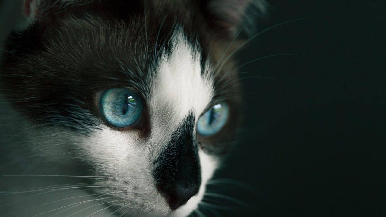 Costruire Lettiera Per Gatti come funziona la mente del gatto? tutto ciò che devi sapere