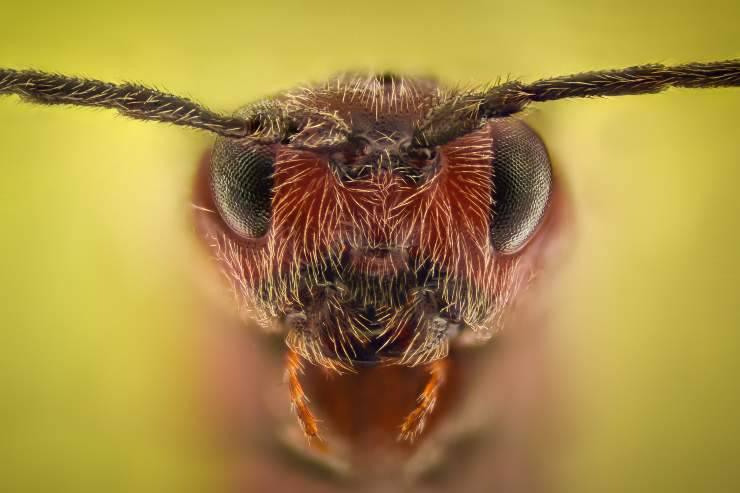 come vedono le formiche