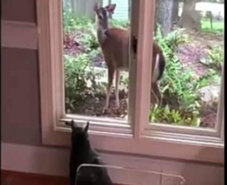 Amicizia animali (Foto video)