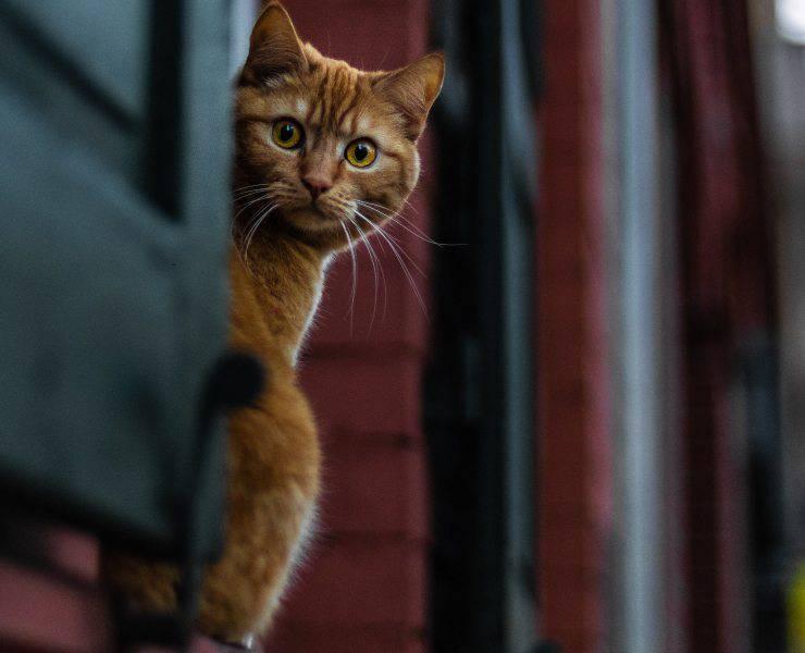 Comportamenti più strani del gatto
