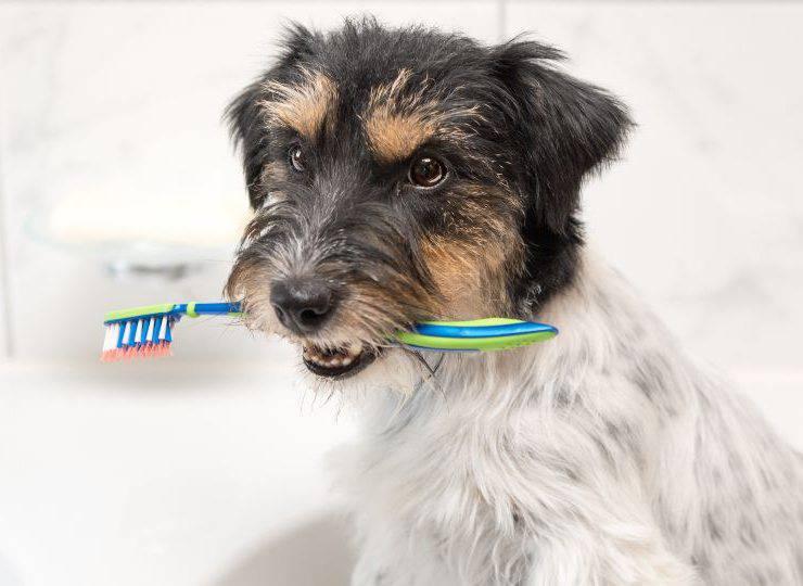 dentifricio cani fai da te