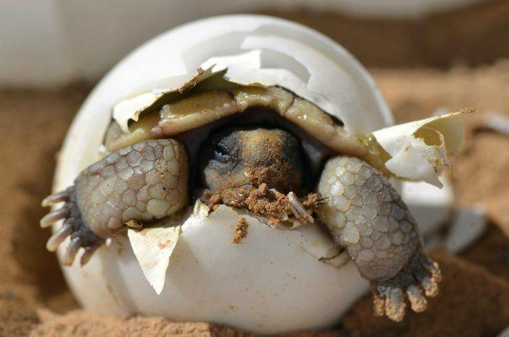 Uova di tartaruga