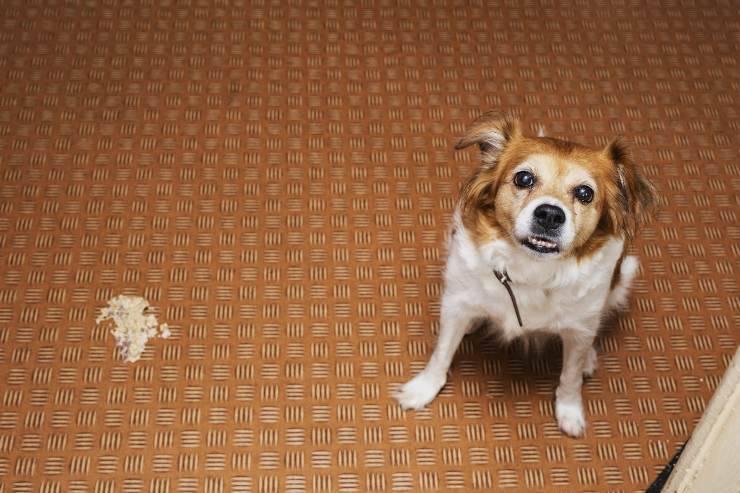 Diarrea nel cane