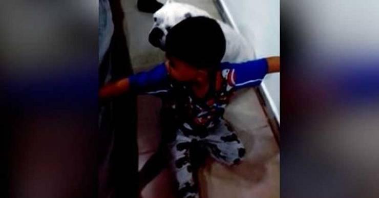 bambino difende cane