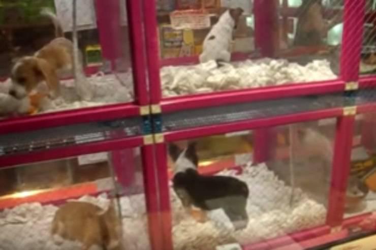distributori automatici cuccioli cane