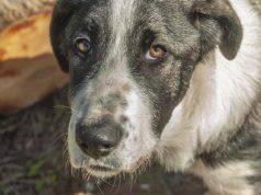 Maltrattamenti sugli animali cani