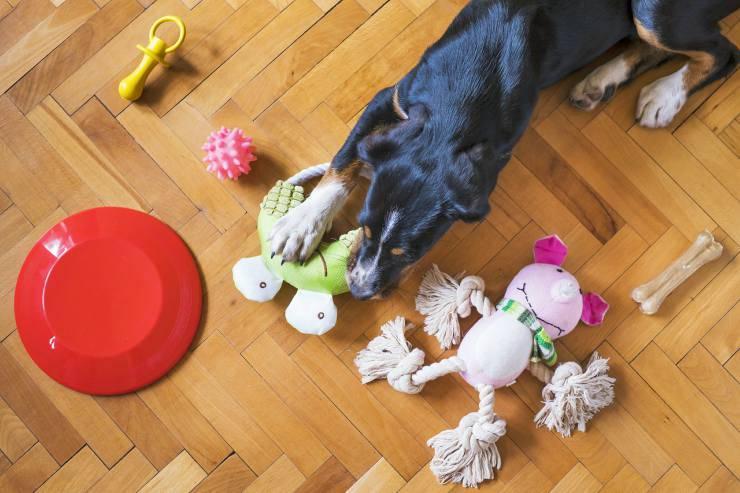 Togliere oggetti dalla bocca del cane