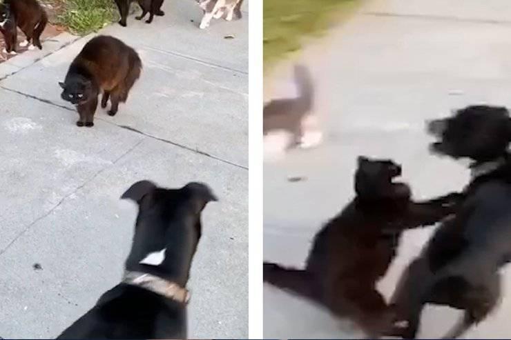 Banda gatti contro cane