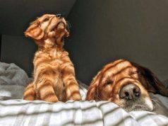 Perché ai cani piace stare al sole? Rischi e benefici