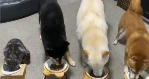 Cani e gatti mentre mangiano (Foto video Instagram)