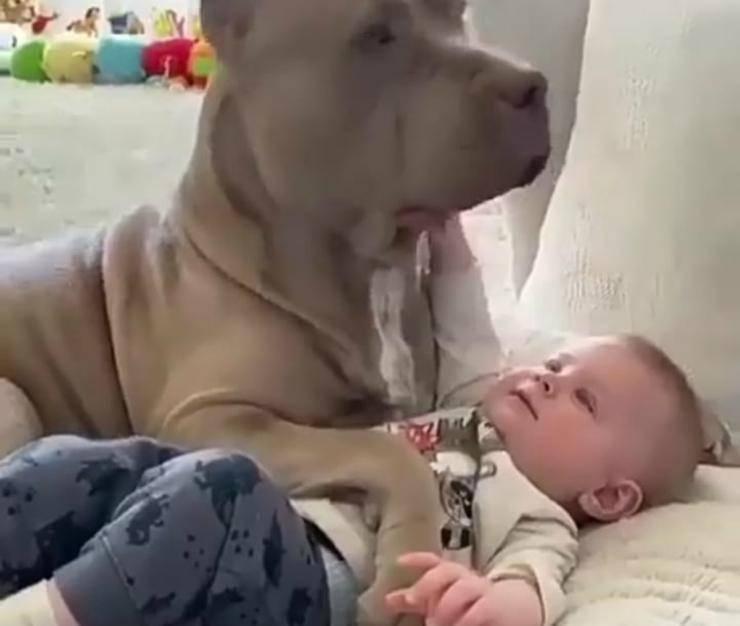 Tenerezza e amore (Foto video)