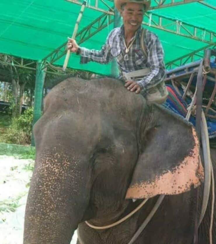 orrore turismo elefanti
