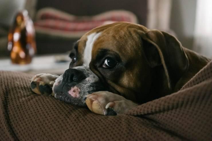 Un trauma nel cane può influire sulla sua personalità e comportamento