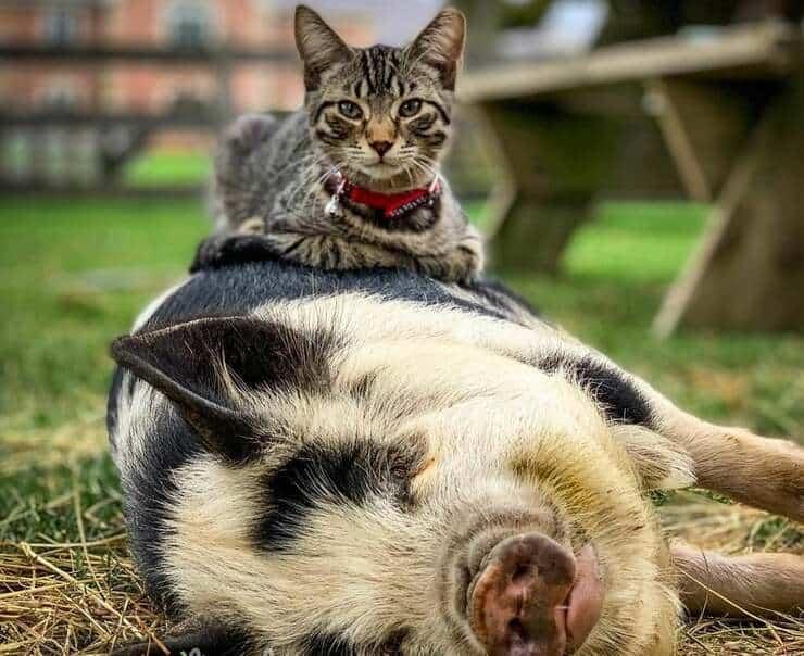 ernest il gatto che massaggia gli animali