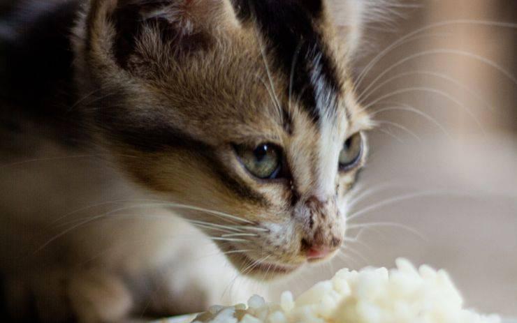 errori alimentazione gatto