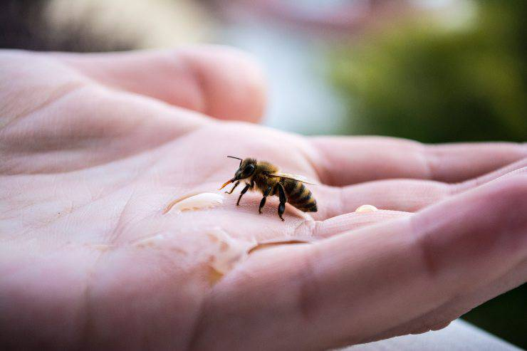 Migliori insetti domestici