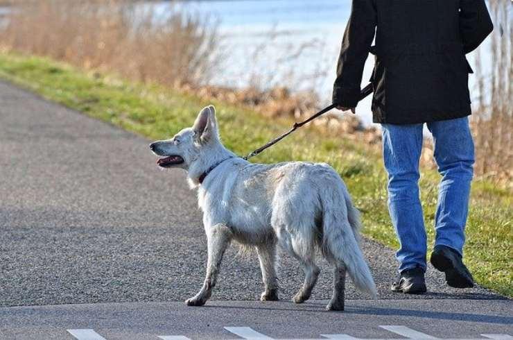 passeggiare con il cane nella fase 2