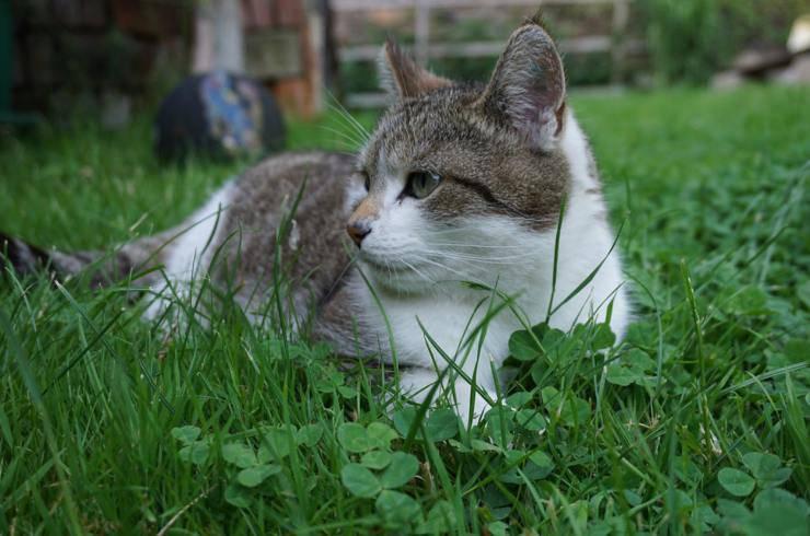 gatto da interno all'esterno