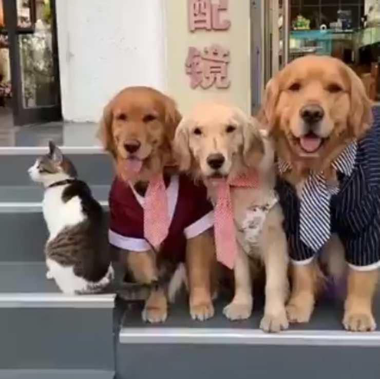 cani gatto foto famiglia