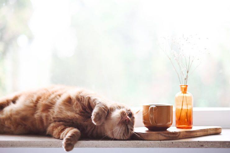 Pet-café