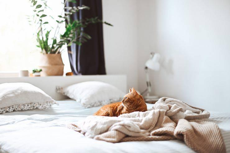 Buttare il gatto fuori dal letto